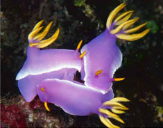 purple slugs